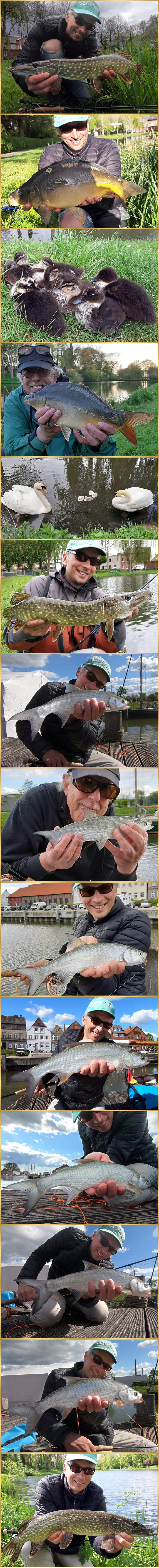 flyfishing asp pike carp